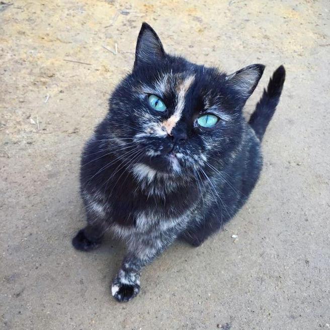В «Аптекарском огороде» готовятся к рождению котят с голубыми кровями