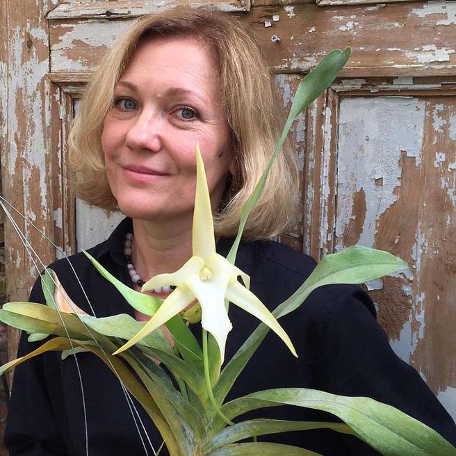 Редкую орхидею Звезду Дарвина можно увидеть с 17 августа в «Аптекарском огороде»