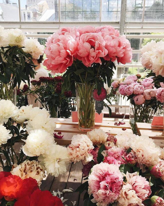 Крупнейшую в России выставку пионов и ирисов в «Аптекарском огороде» продлили до 2 июля